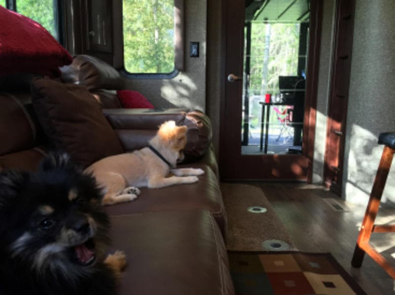 It's A Dog's Life - Tips For RVing With Your Dog | Travelcamp